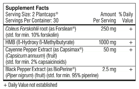 Fat Burner Ingredients