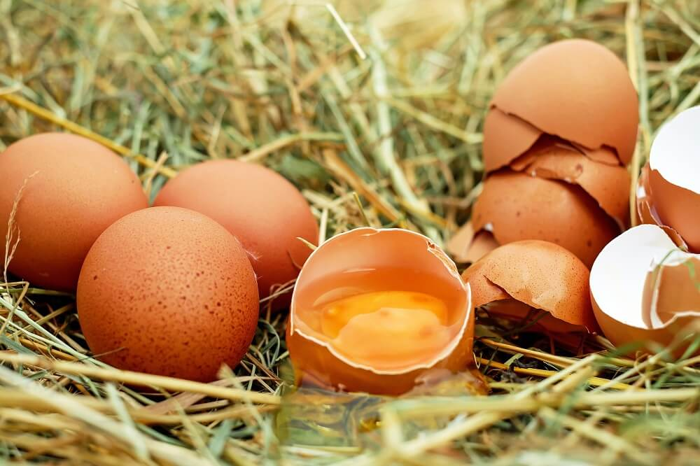 eggs source of choline