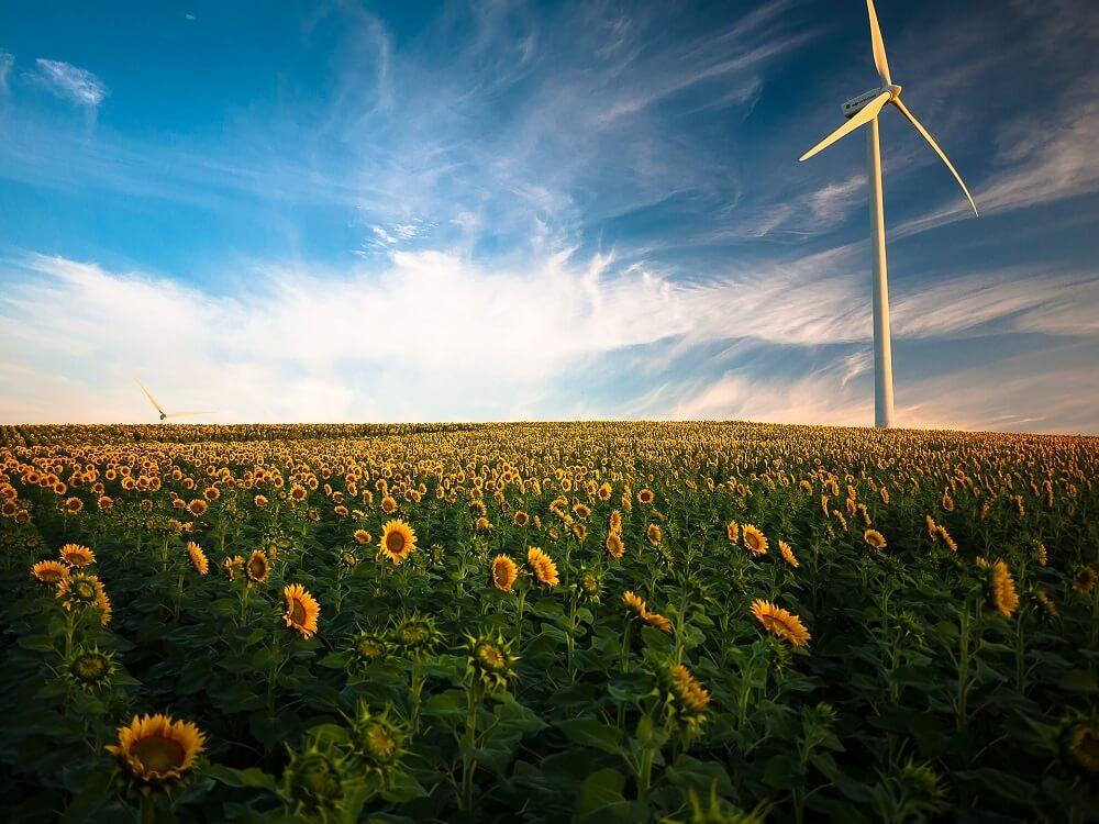 sunflower fields source of phosphatidylserine nootropic