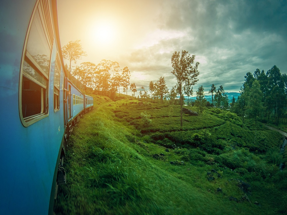 green tea fields and a train