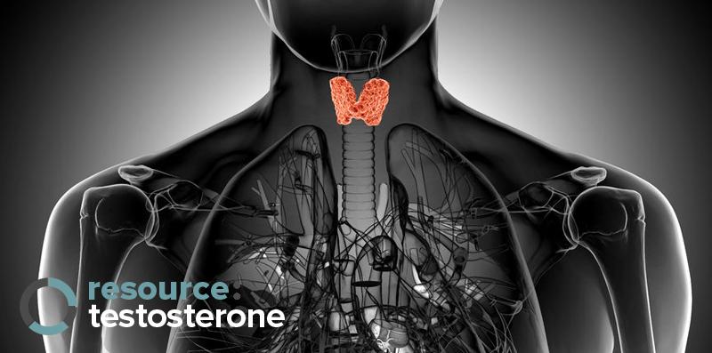 Scandal : Hidden Thyroid Hormones in Fat Burners